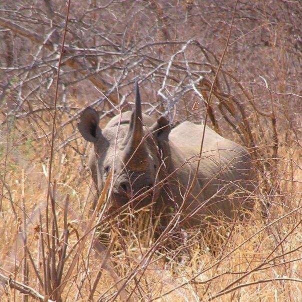 Hokoyo Wildlife